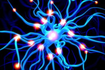 Sistema nervoso autonomo o vegetativo
